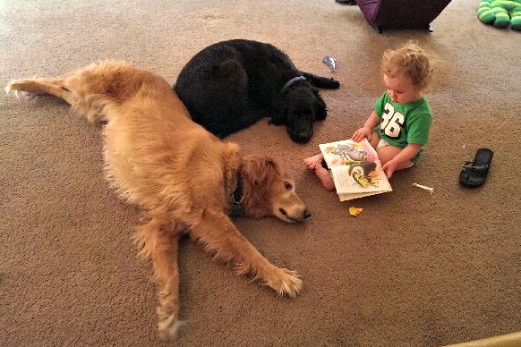 June13Preadingdogs